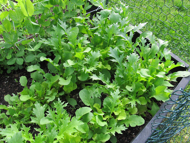 Start with some easy and quick growing plants, like lettuce, peas and beans.