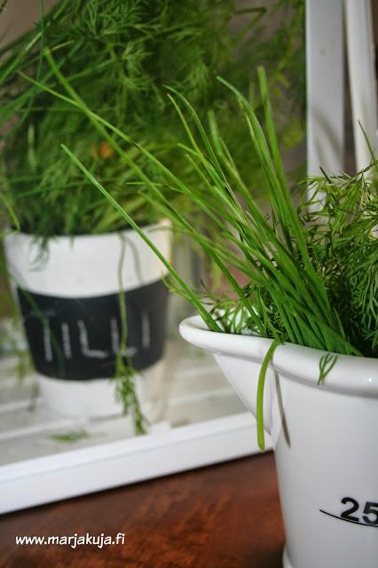 minikasvihuoneen vihreat