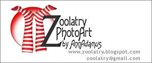 Header by Zoolatry