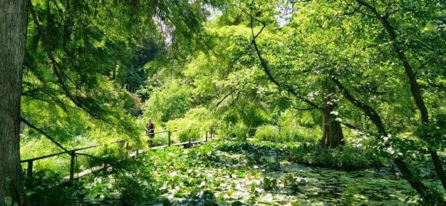 Informações sobre o Orto Botânico di Lucca