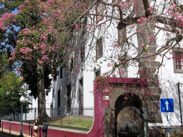 tree with flowers on Rua do Castanheiro
