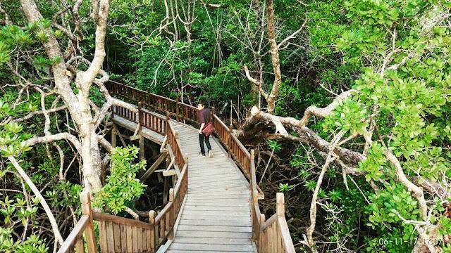 taman wisata mangrove sukadana kayong utara