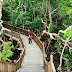 Taman Wisata Mangrove Sukadana Kabupaten Kayong Utara (KKU)