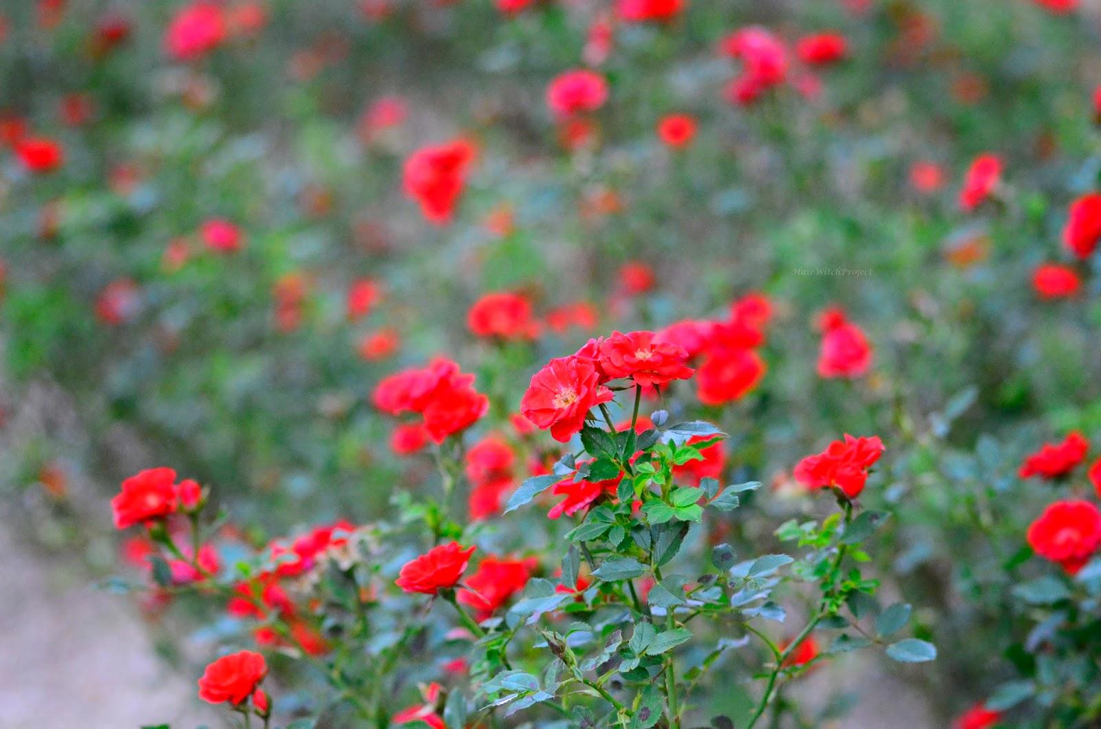 jesień | kwiaty | czerwień | zieleń | krajobraz | natura