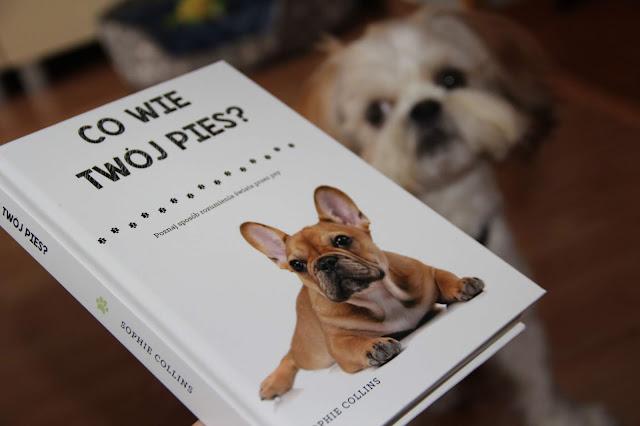 """Co wie twój pies?"" Sophie Collins"