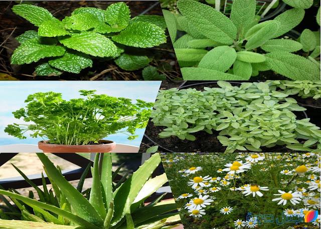 النباتات و الغلال