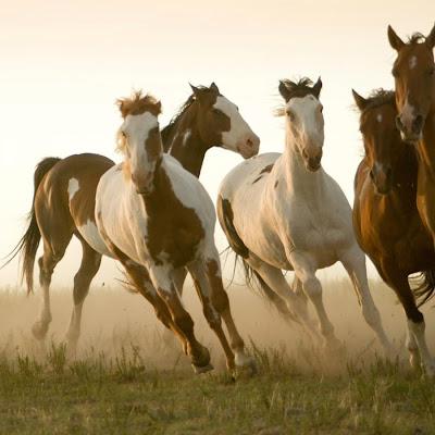 Jogos de cavalos para 2