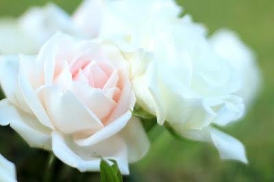Pastel Pink Roses Photo by Mademoiselle Mermaid.