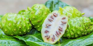 Yuk kenali buah mengkudu yang kaya akan manfaat