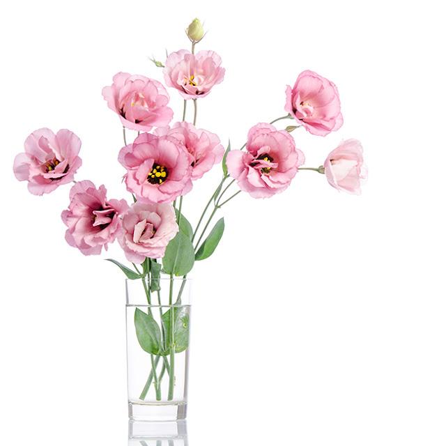 hoa cat tuong co y nghia gi