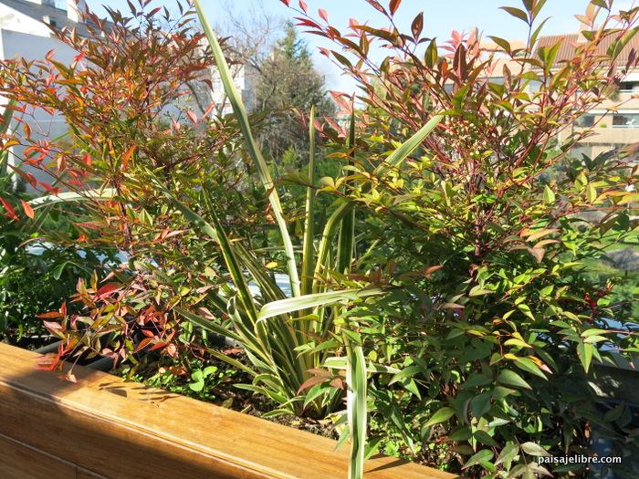 Plantas de exterior que aguanten el sol perfect primula - Plantas terraza ...