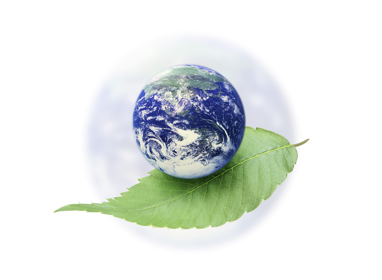 Short Essay on Save Forests