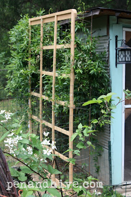 boxspring trellis and carolina jasmine