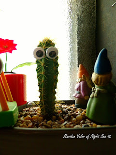 A few of my marimo; I just had to share this picture of my cactus with eyes.