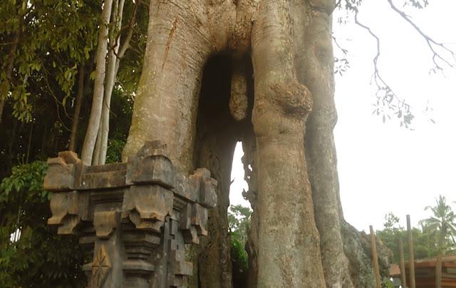 Obyek Wisata Sangeh Bali, Penuh dengan Monyetnya