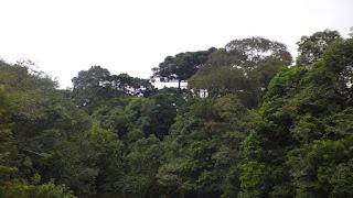 Floresta - Lei 11.284/06 Gestão de Florestas Públicas: Conceitos.