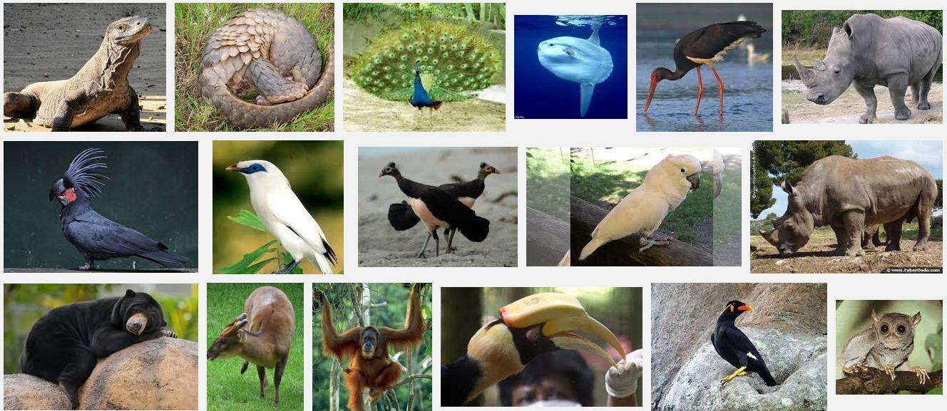 450 Hewan Dan Tumbuhan Langka Beserta Gambarnya Gratis Terbaru