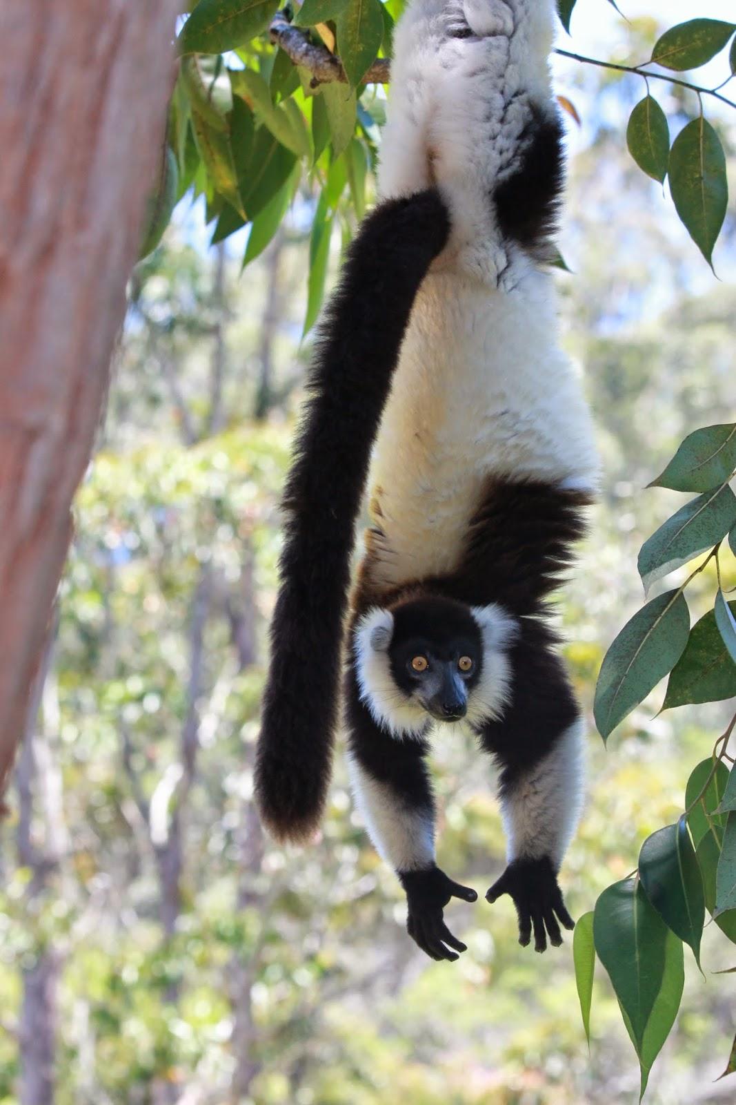 Madagascar 2014: Vakona Private Reserve- Andasibe- Flora & Fauna