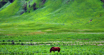 padang savana dan bukit teletubbies, gunung bromo wisata jawa timur