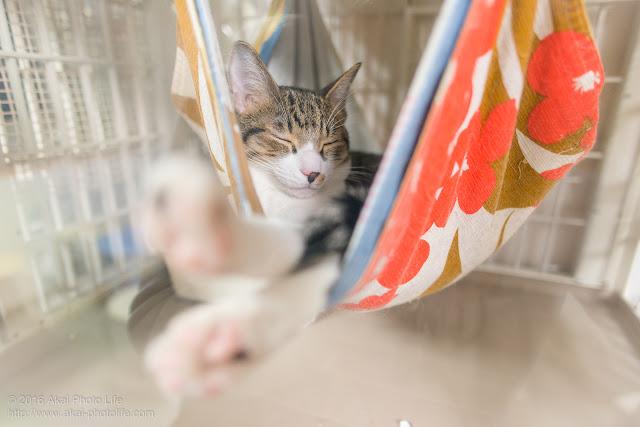 西国分寺シェルターのケージ内のハンモックに揺られ気持ち良さそうに寝ている猫の写真