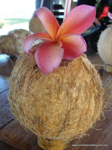 welcome coconut milk drink at Paradise Taveuni in Fiji