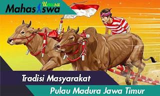 budaya kerapan sapi madura