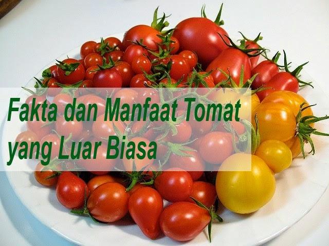 Fakta Dan Manfaat Tomat Yang Luar Biasa
