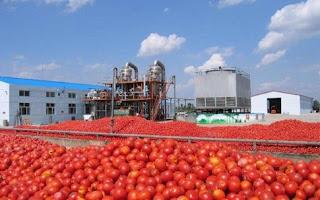 Ηλεία: Ζημιές στην βιομηχανική τομάτα και κηπευτικά προϊόντα από το μπουρίνι