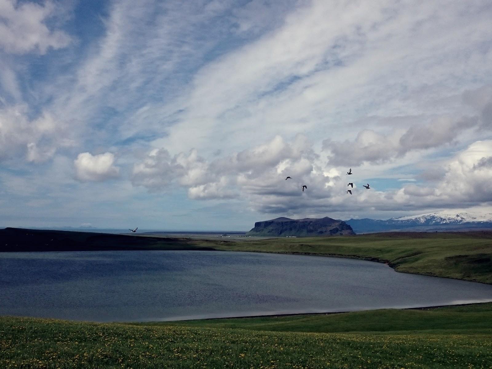 islandzkie ptaki, marzenia, panidorcia, Pani Dorcia, podróże, niebo