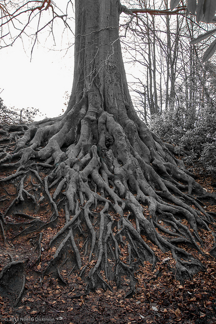The Deeper Roots Of Hope