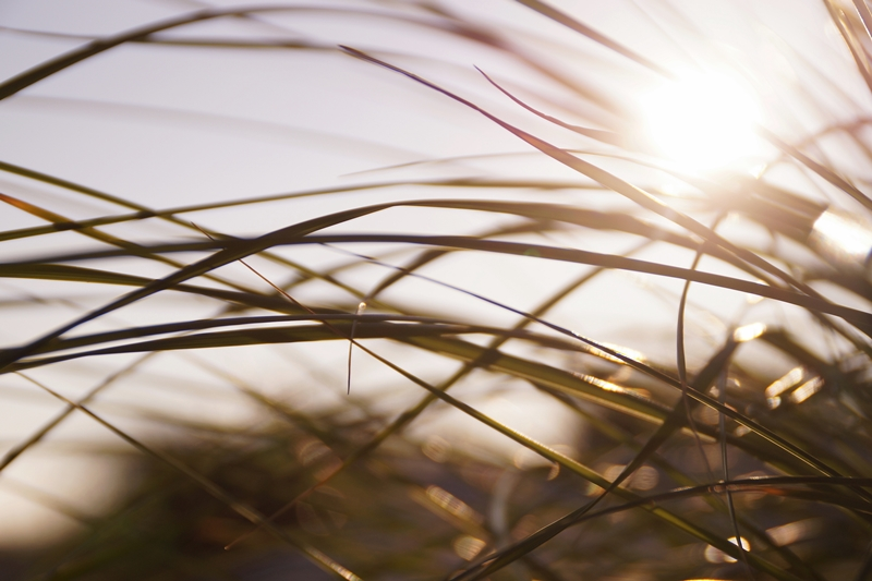 Dünengras Sonne Amrum Strand