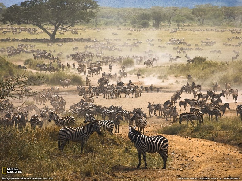 Image of: Peta Konsep Kingdom Animalia Klasifikasi Kingdom Animalia hewan Beserta Ciri Dan Contohnya