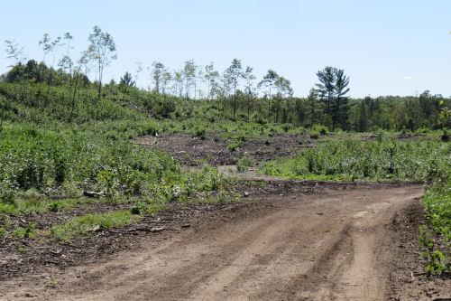logged area