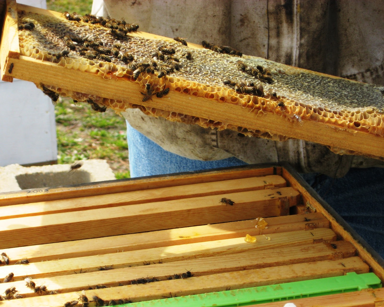 The Peace Bee Farmer: Fall Bee Hive Management