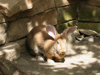 G'Day Big Bunny.