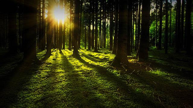 18 Faktor-Faktor Penyebab Kerusakan Hutan