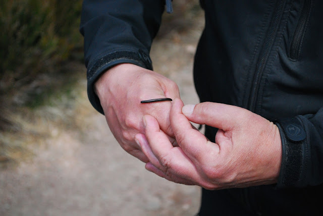 Mike the ranger - creepy crawlies - Glen Tanar Estate walk