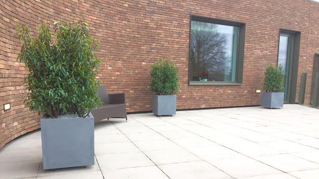 Groene planten die winterhard of wintervast zijn goed tegen zon kunnen en weinig water nodig hebben voor terras of balkon voor bedrijven of kantoor. Prijzen op aanvraag