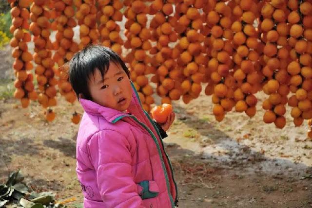 柿子 3歲的小女孩 吃柿子不當 柿子和牛奶