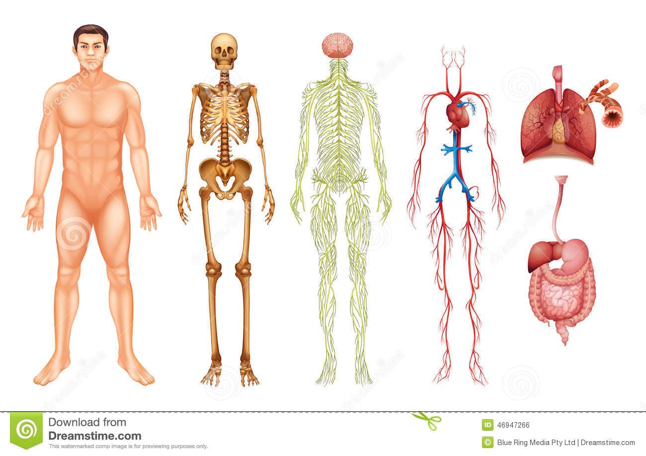 El Cuerpo Humano: Visión Integral Del Cuerpo Humano Y La Interacción De