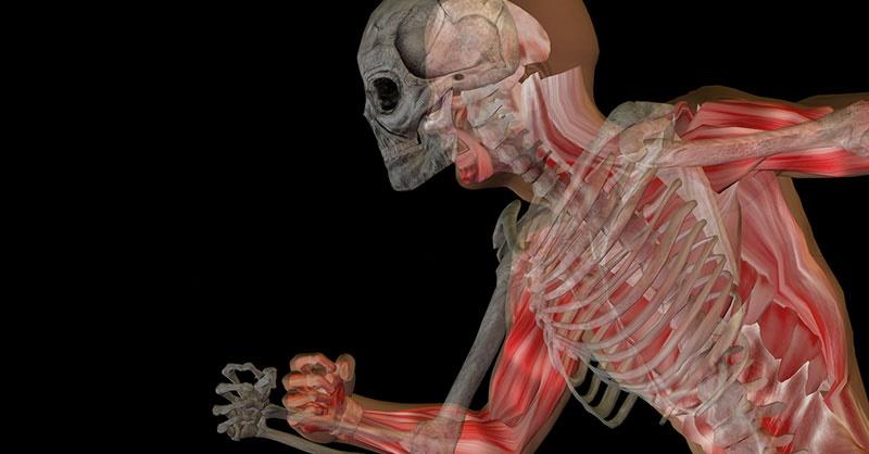 El Sistema Osteo Artro Muscular