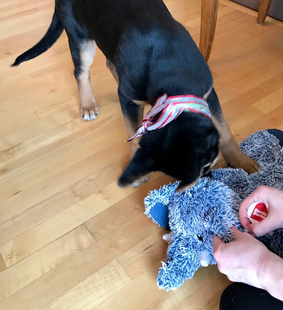 Elephant dog toy