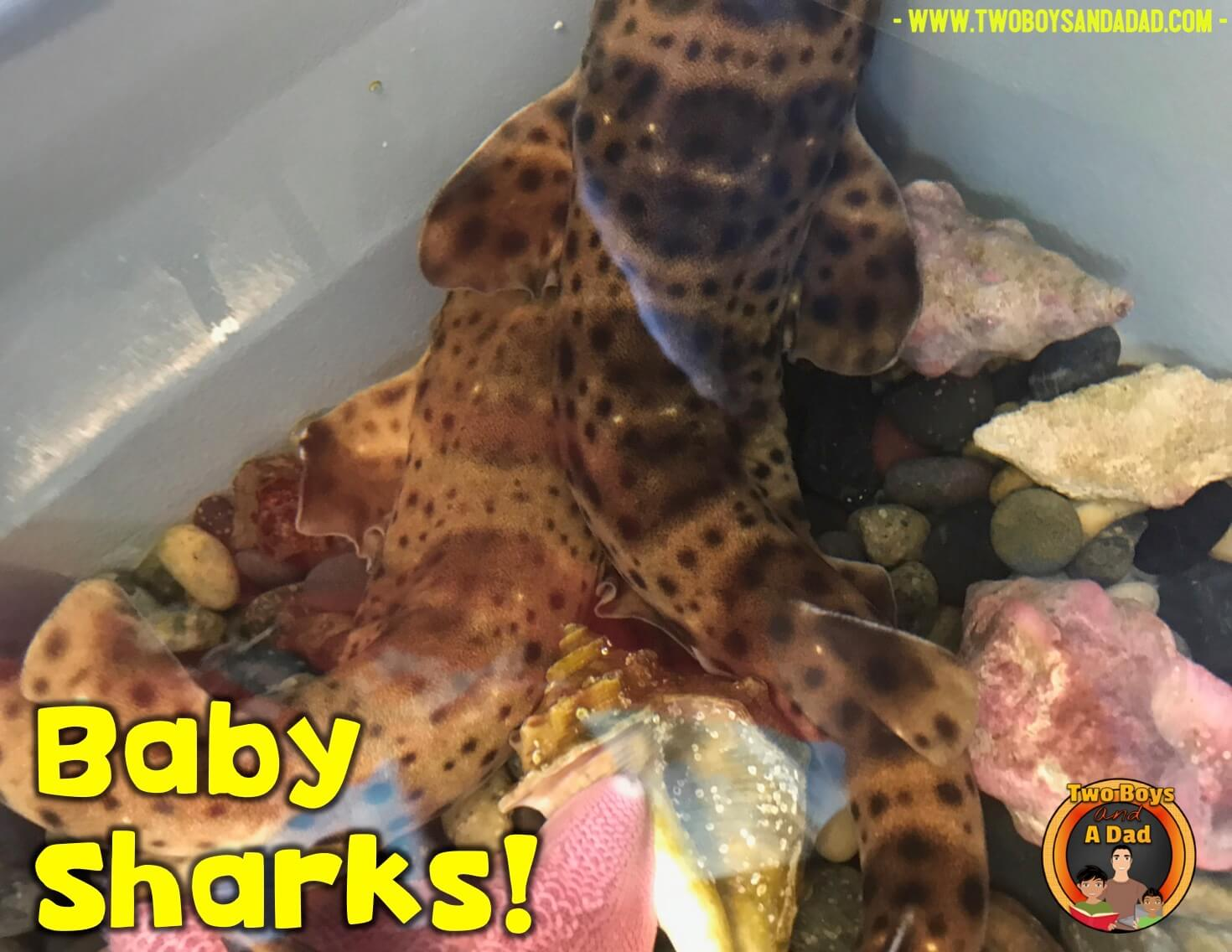 baby sharks at the science assembly