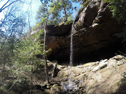 tree wilderness sipsey area waterfall left forest national bankhead hiking rex adventures second