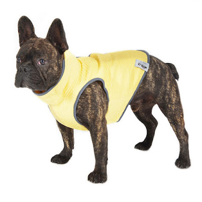 French Bulldog wears a yellow dog cooling vest by Wilko Pet Care