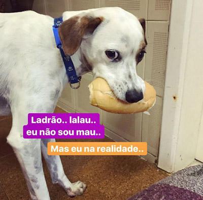 Foto do meu cachorro segurando um pão inteiro na boca. Sobre a imagem, a letra de uma música do filme do Aladdin. Ladrão, lalau, eu não sou mau...