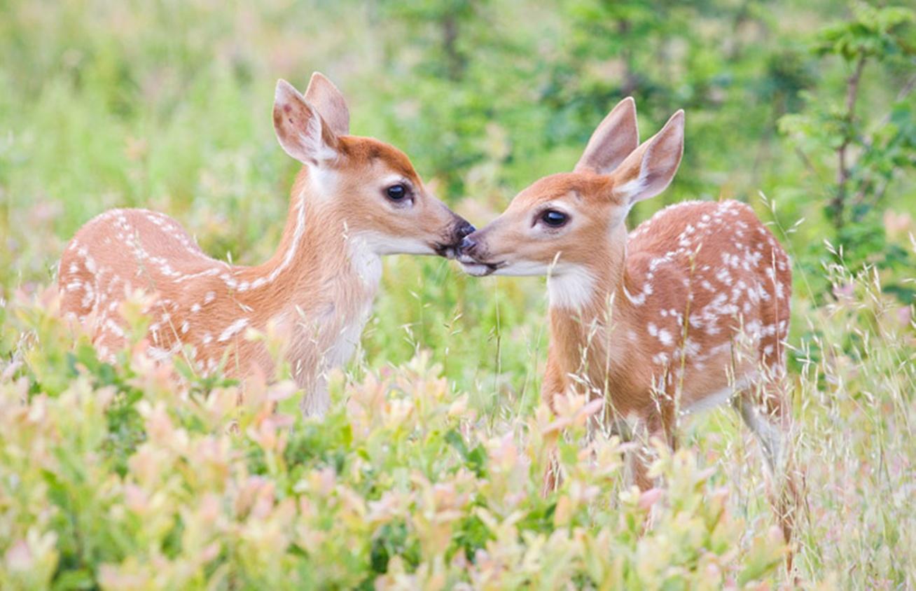 Cute Sleeping Babies Wallpapers Top 22 Most Beatiful Beautiful Deer Wallpapers In Hd