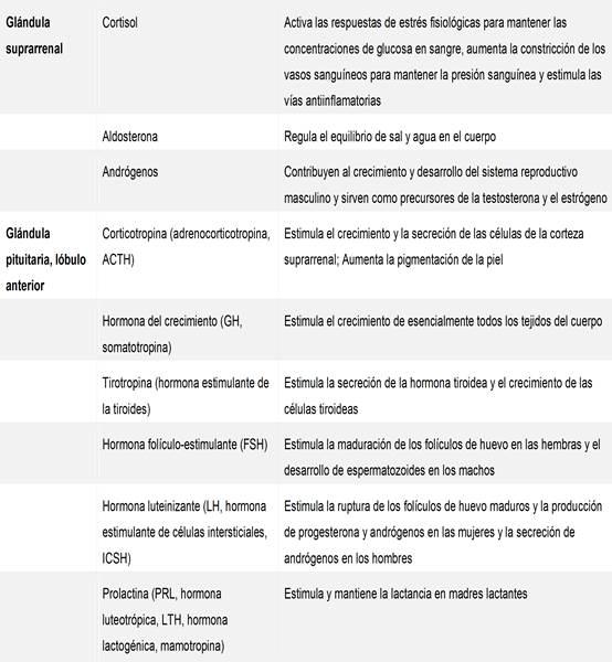 Sistema endocrino: glándulas y hormonas - funciones