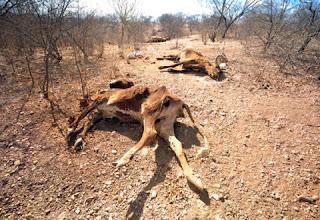 Governo libera R$ 790 milhões para ações de combate à seca no Nordeste