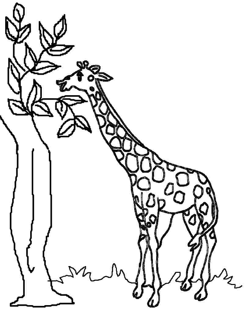 giraffe eating leaf coloring page